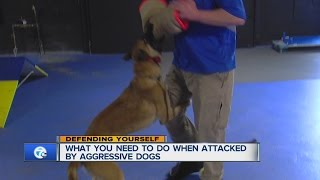 train your dog how to attack on command