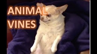 BEST VINES | ANIMAL VINES | time waster