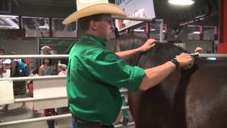 Horse breed 101 - The Arabian