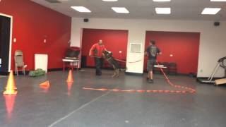 Nero Psa Pdc Trial Prep At Chicago Canine Company