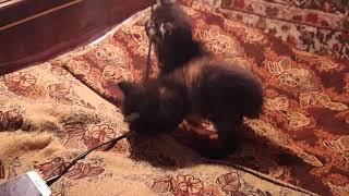 Когда из-за телефона забыл покормить котят