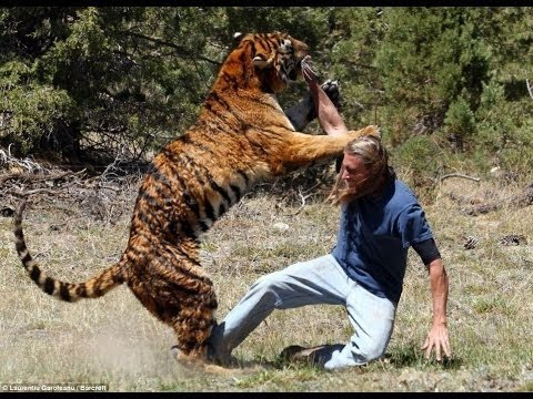 Watch on mike tyson pet tiger
