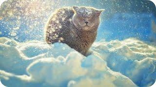Милые Смешные Животные и Снег! Animals And Snow!