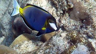 видео морские аквариумные рыбки