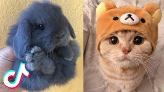 These May Be the Cutest Pets on TikTok 🥰