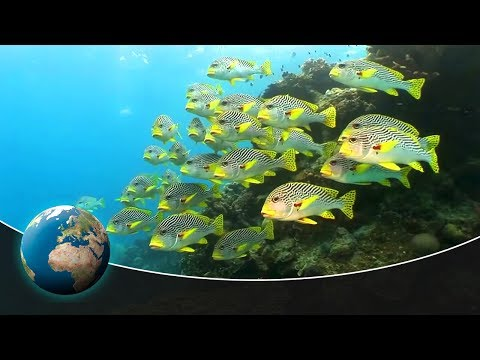 Symphony of life: Underwater world of Australia