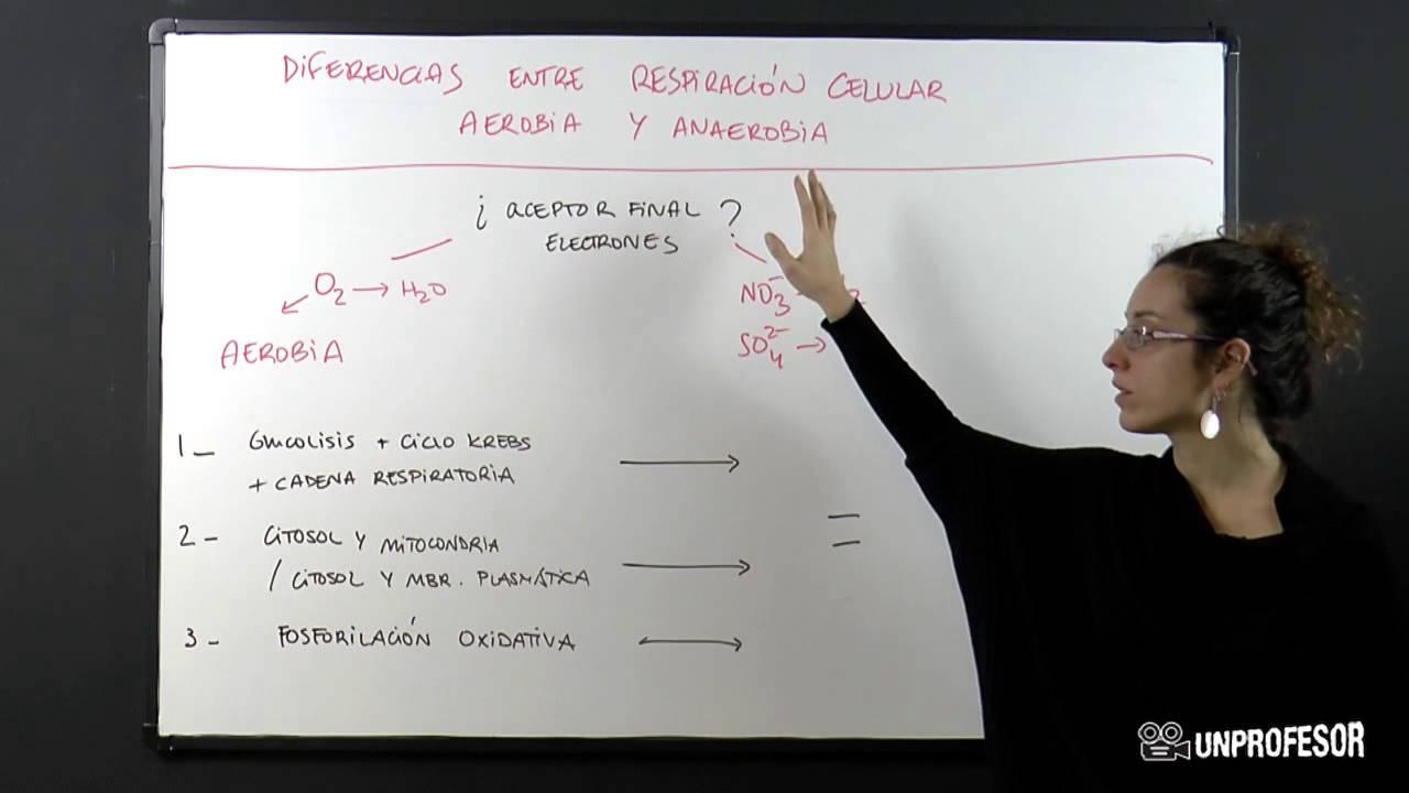comparacion entre glucolisis anaerobica y aerobica