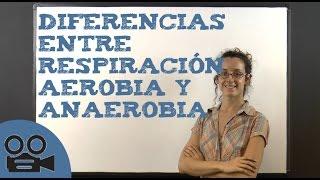 Diferencias entre respiración aerobia y anaerobia