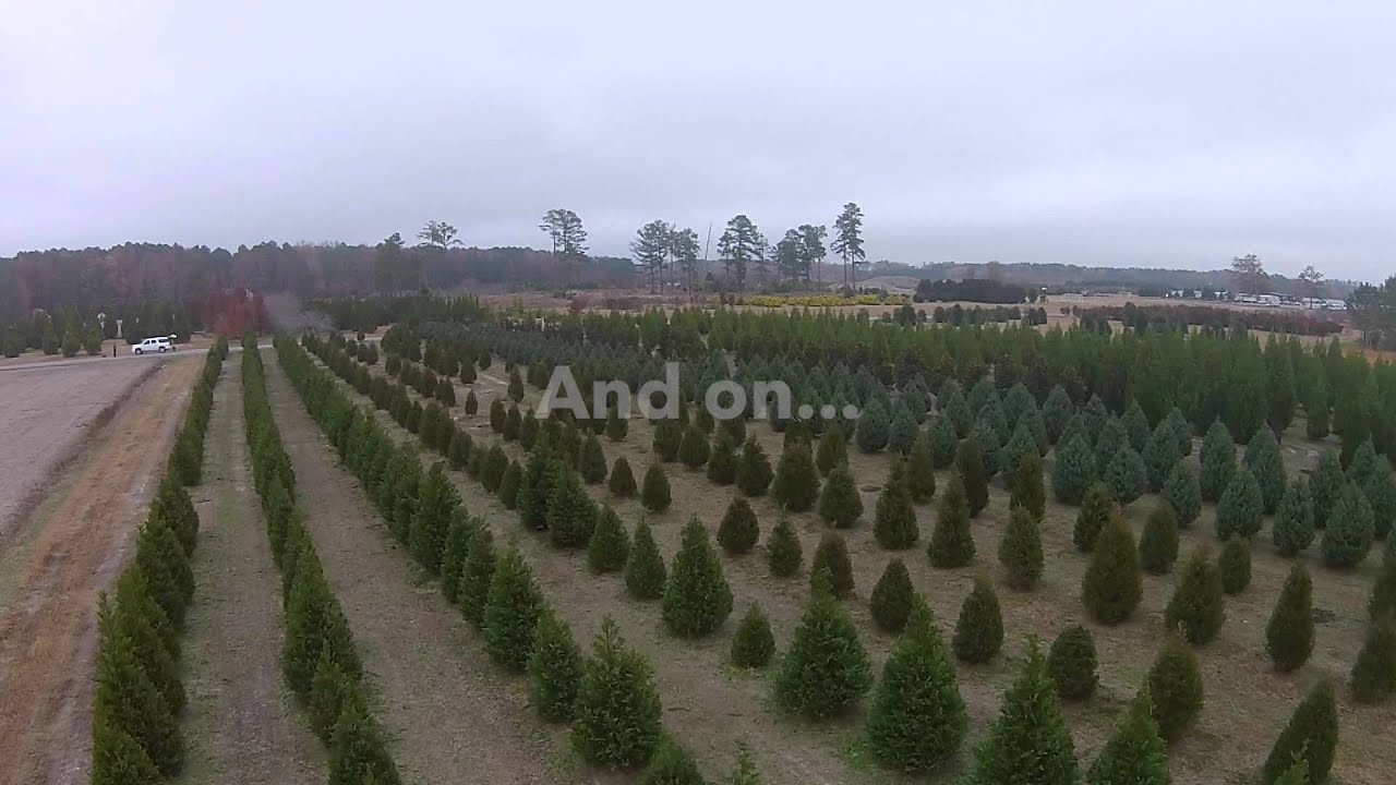 Christmas Trees at Historic Greenbrier Farms in Chesapeake