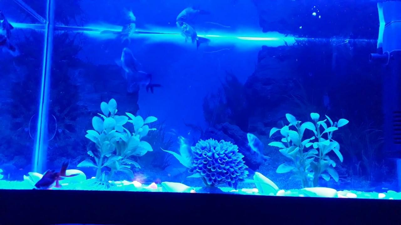Akvaryum (Japon Balıkları)