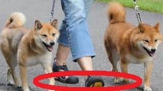 コチラで3万円を無料配布中⇛http://goo.gl/7YhFZP 犬を飼われている皆...