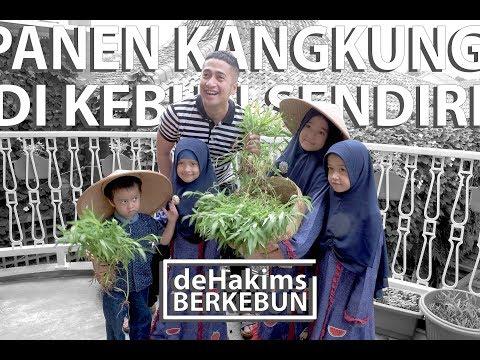Panen Kangkung di Kebun Sendiri! - deHakims Berkebun