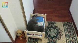 Наш кот ) Подарили кровать. Радость и благодарность  )))