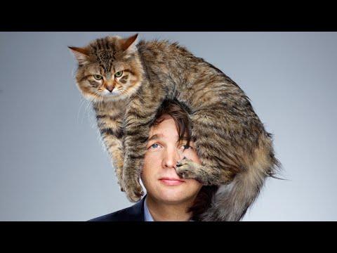 Вопрос: Как вылечить больную кошку?