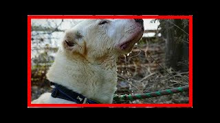 | Dog Rescue StoriesEvery Little Thing Is New For Dog Who Was Born in A Cage