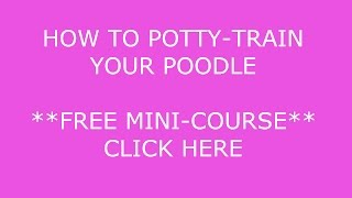 **How To POTTY-Train A Poodle** BOW*WOW !! cLICK hERE