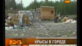 видео Уничтожение крыс