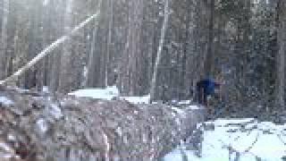 Video Kvisting av stamme med Husquarna 345 motorsag download MP3, 3GP, MP4, WEBM, AVI, FLV November 2017