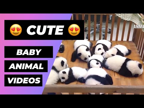 Baby Animals 🔴 Funny and Cute Baby Animals Videos Compilation (2018) Animales Bebes Videos