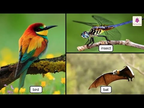 All About Birds | Science For Kids | Grade 3 | Periwinkle