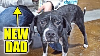 ABANDONED DOG RESCUED Empty The Shelters (2 of 2)