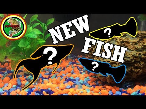 Adding 3 NEW Fish To My 10 Gallon Aquarium! (Building My Tropical Fish Community!)