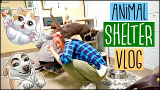 SPCA ANIMAL PET ADOPTION SHELTER VLOG | I want to adopt all the Pets!😭🐾