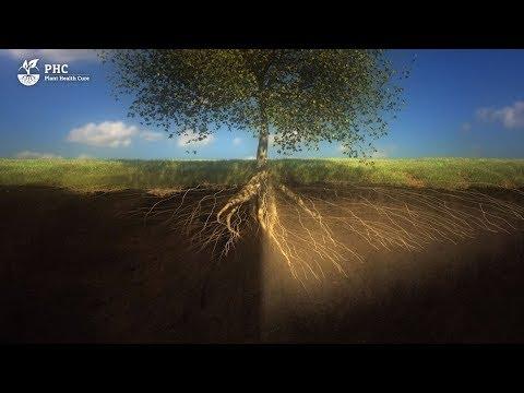 PHC Film: Der Boden ist ein lebender Organismus