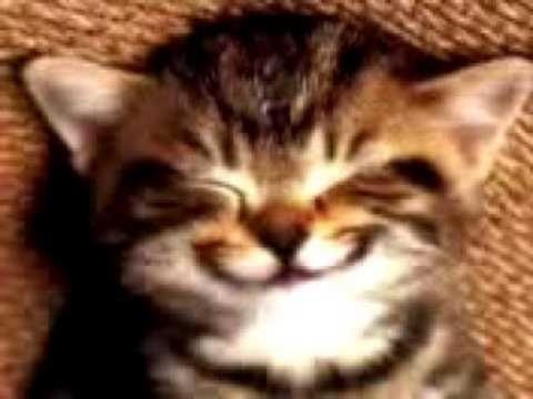 Cute Kitten singing Happy Birthday To You!