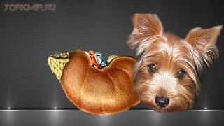 Болезнь Аддисона у собак | Признаки | Лечение.