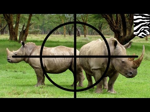 Rhino horn poaching: More than 1,300 African rhinos slaughtered for horns in 2015 - TomoNews