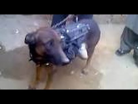 Taliban Tells The US: ' We Have Your Dog '