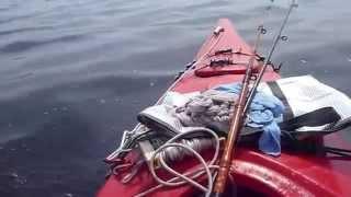 鎌倉カヤック釣りバカ日記(5/30)-大漁なり、サバが釣れすぎて困るの巻、...