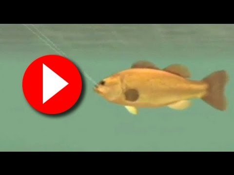 Shimano Xtreme Fishing (Wii) Spear Fishing Gameplay