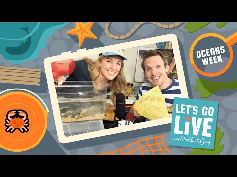 How To Make Your Own Rockpool | Oceans Week | #29 LET'S GO LIVE With Maddie & Greg