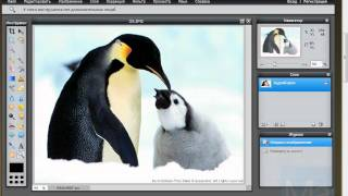 Фотошоп онлайн Урок №4 Вкладка