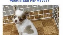 hqdefault - Feed Diabetic Dog