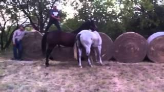 Mad gay horse lol
