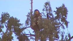 Man in tree halts Seattle traffic