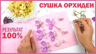 видео Способы сушки цветов