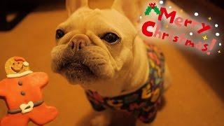 こうめさんと迎える2度目のクリスマス♪可愛いフレブル用のお洋服とサン...