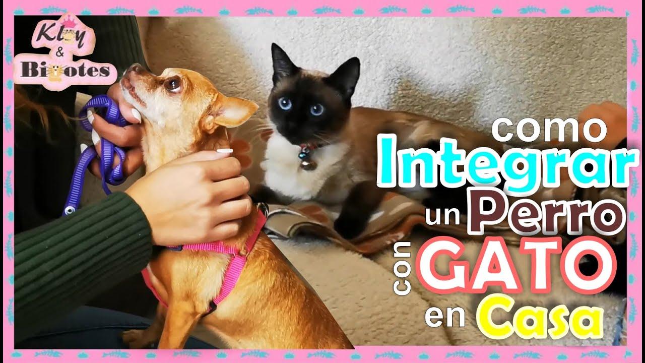 Como presentar un perro con un gato? Como integrar un perro teniendo un gato en casa?