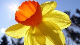 Влюбленный Нарцисс In love with Narcissus