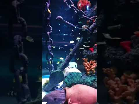 اكواريوم اسطنبول فوروم .. Istanbul forum aquarium