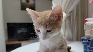 [고양이] 그리고 마늘까기 #1