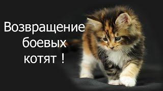 Возвращение боевых котят ! ( с вебкой )