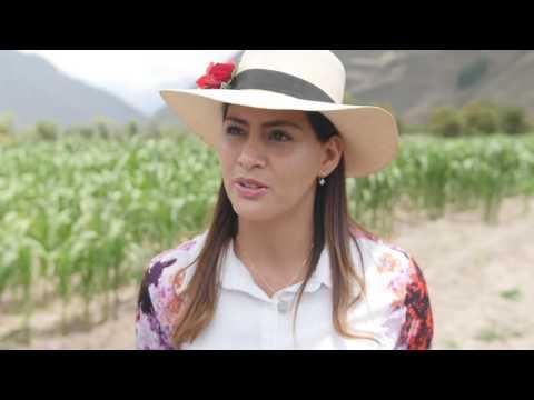 HACIENDA SARAPAMPA- Maíz Blanco Gigante Cusco [Farm To Table Cusco, PERU]