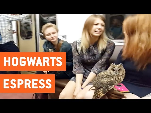 Birds On A Train | Hogwarts Express?