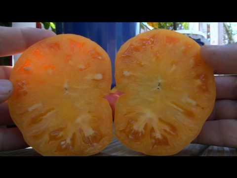 Kellogg's Breakfast - Tomato - Indeterminate