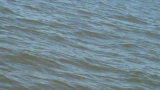 Christian being pulled on tube behind boat with pod of dolphin in Pass Christian, MS Part 3